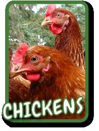 Bens Free Range Eggs Staffordshire / Shropshire Border